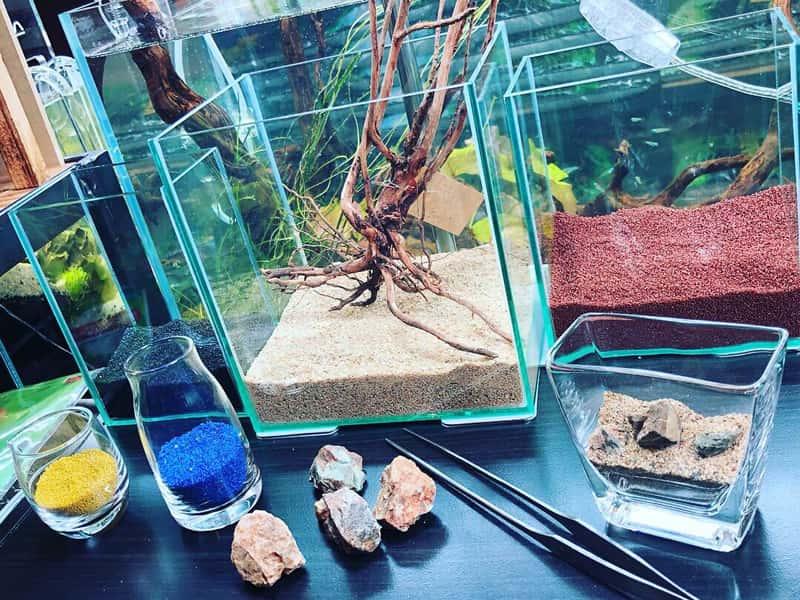 小さな水槽でつくる水草水槽!グラスアクアリウム体験!