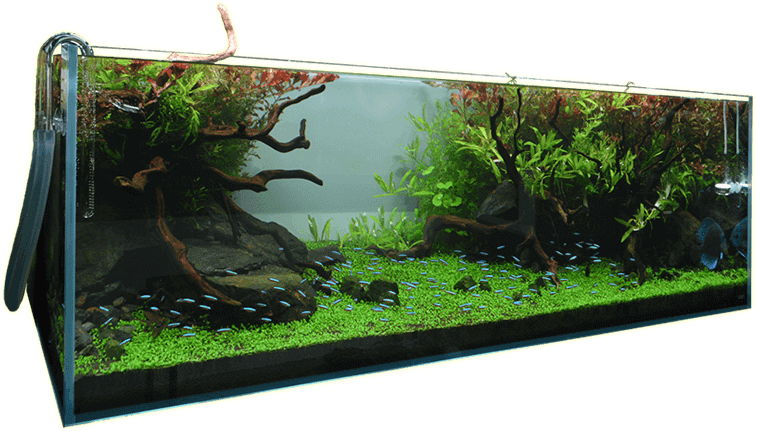 水草・植物・苔をレイアウトして楽しむ専門店