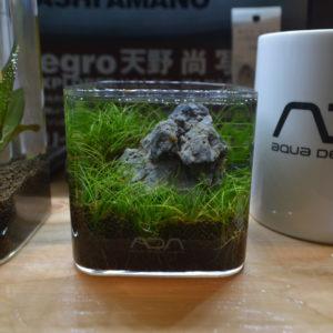 カップグラスで草原を作ろう!