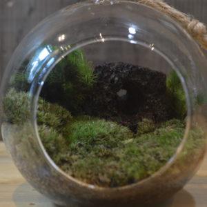 吊るしても楽しめるハンギングガラスでコケリウム体験!