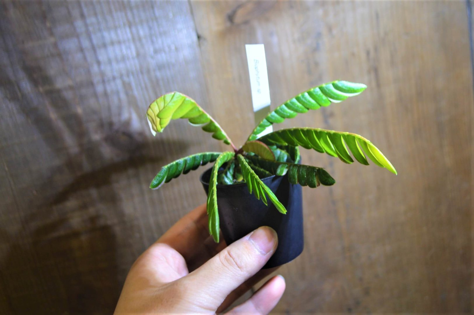 珍しい植物 入荷!